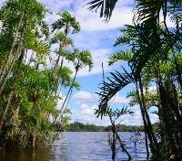 Amazonia Rainforest