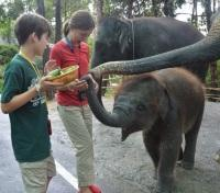 The Kids Feeding The Elephants