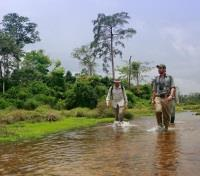 Guided Walking Safari