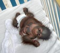 Orangutan Foundation International's Wildlife Rehabilitation Centre