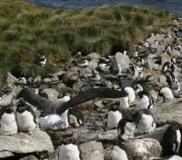West Falkland Seabirds