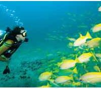 Optional Scuba Diving
