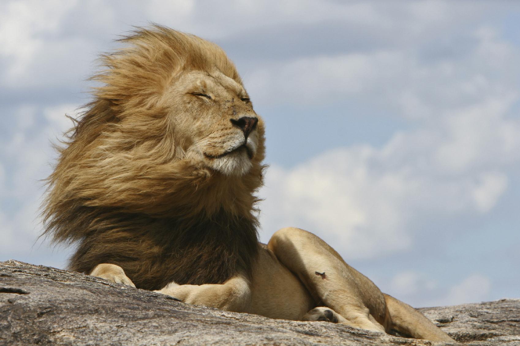 Tanzania Adventure Safari - Tanzania Tours - Kensington Tours - Viajes de lujo, privada Viaje Guiado