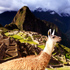 Thumbnail Image for Machu Picchu Discovery