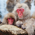 Thumbnail Image for Mountain Temples & Snow Monkeys