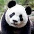 Thumbnail Image for Kung Fu Panda Family Adventure