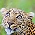 Thumbnail Image for Kenya & Tanzania Game Tracker