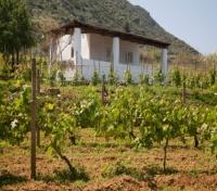 Malvasia Vineyard