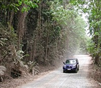 The Road to Cape Tribulation