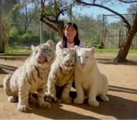 Meet the tiger cubs!