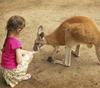 Child Feeding a Kangaroo