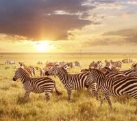 Sights on a morning game drive - Zebras