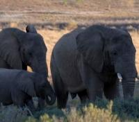 Sanbona Wildlife Reserve Elephant Family
