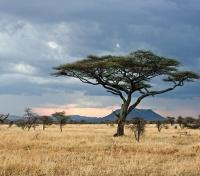 Serengeti Plains