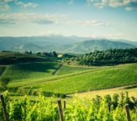 Chianti Wine Region