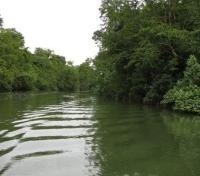 Daintree River