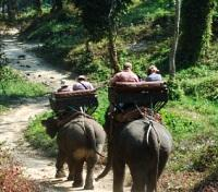 An Elephant Ride