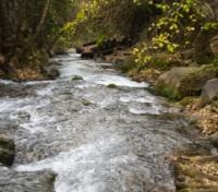 The Banias River