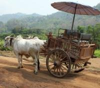 Traditional Ox-Cart