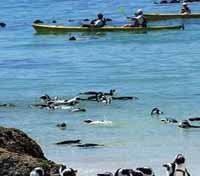 Kayak with Penguins