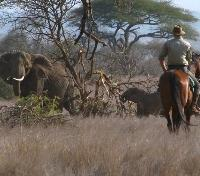 Horseback Safari Guide