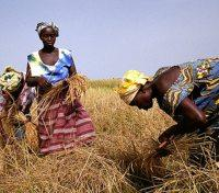 Village Women Working