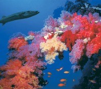 Sharm El Sheikh coral reef exploration