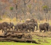 Singita Game Drives
