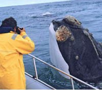 Whale Watching by Boat