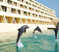 Dolphins at Dreams Resort and Spa