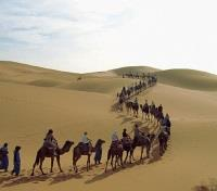 Dromedary Excursions
