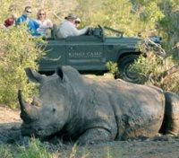 Game Drive with Rhino
