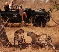 Guests watching Leopards