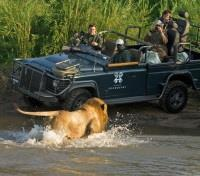 Guests watching lion cross the Sand River