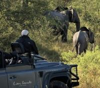 Exciting Game Drives