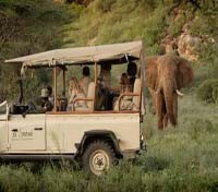 Saruni Samburu - Wildlife