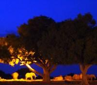 Satao Camp at night