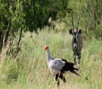 Kalahari Plains Camp - Wildlife