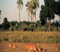 Chitabe Camp - Wildlife