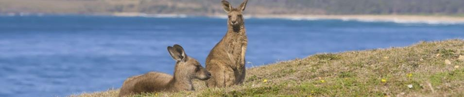 Kangaroo Beach Party!