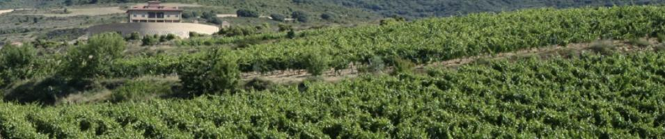 Vineyard In LaRioja