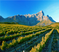 Cape Winelands Getaway