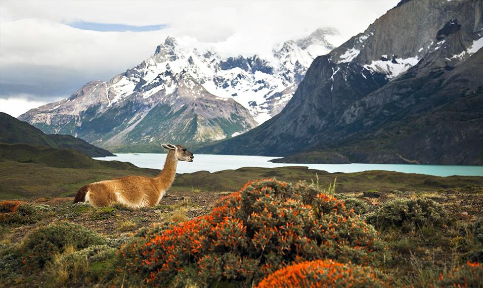 Enjoy the incredible views in Torres del Paine National Park.