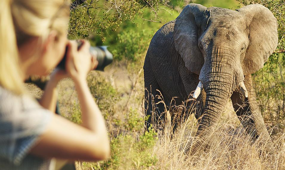 Get up close and personal with gentle giants in Chobe, known for its spectacular elephant population.