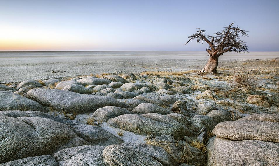 Experience the incredible landscapes of the Makgadikgadi Pan.