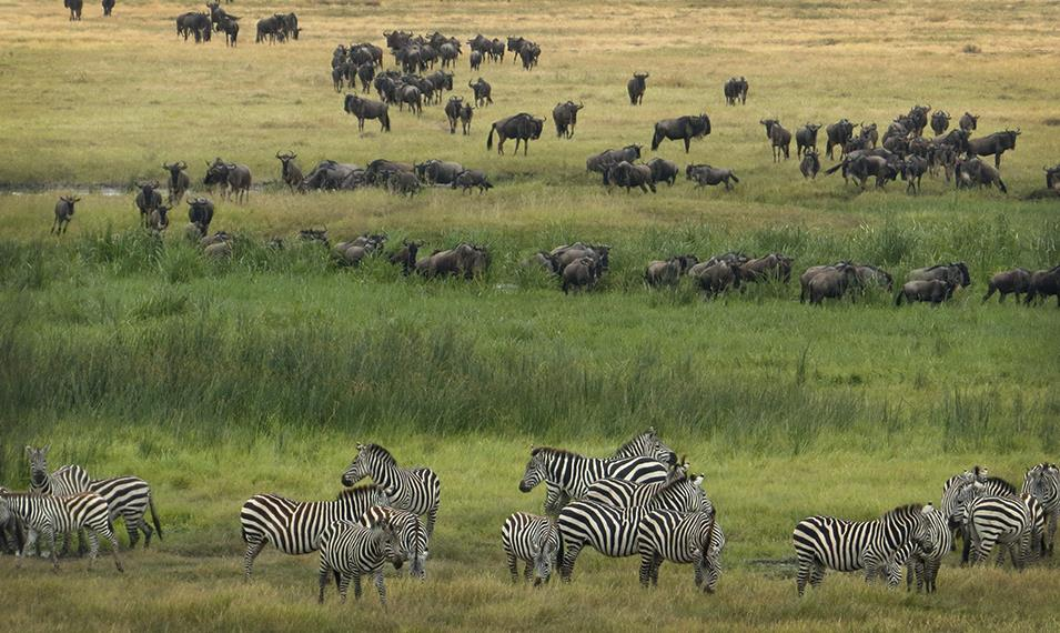 Witness firsthand the incredible spectacle of the Great Migration.