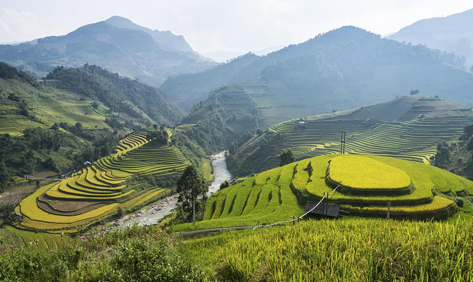 Hike through Vietnam's many rice terraces.