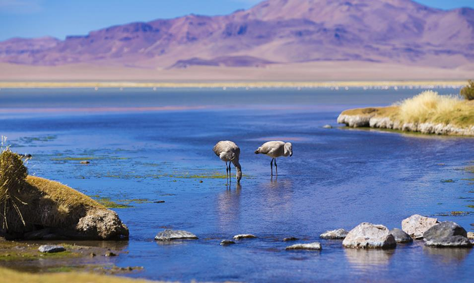 Experience the lunar landscapes of the Atacama Desert.