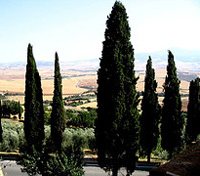 Tuscany Highlights Tours 2018 - 2019 -  Montepulciano
