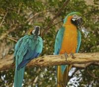 Costa Rica Highlights Tours 2019 - 2020 -  Birding near Tortuga Lodge & Gardens